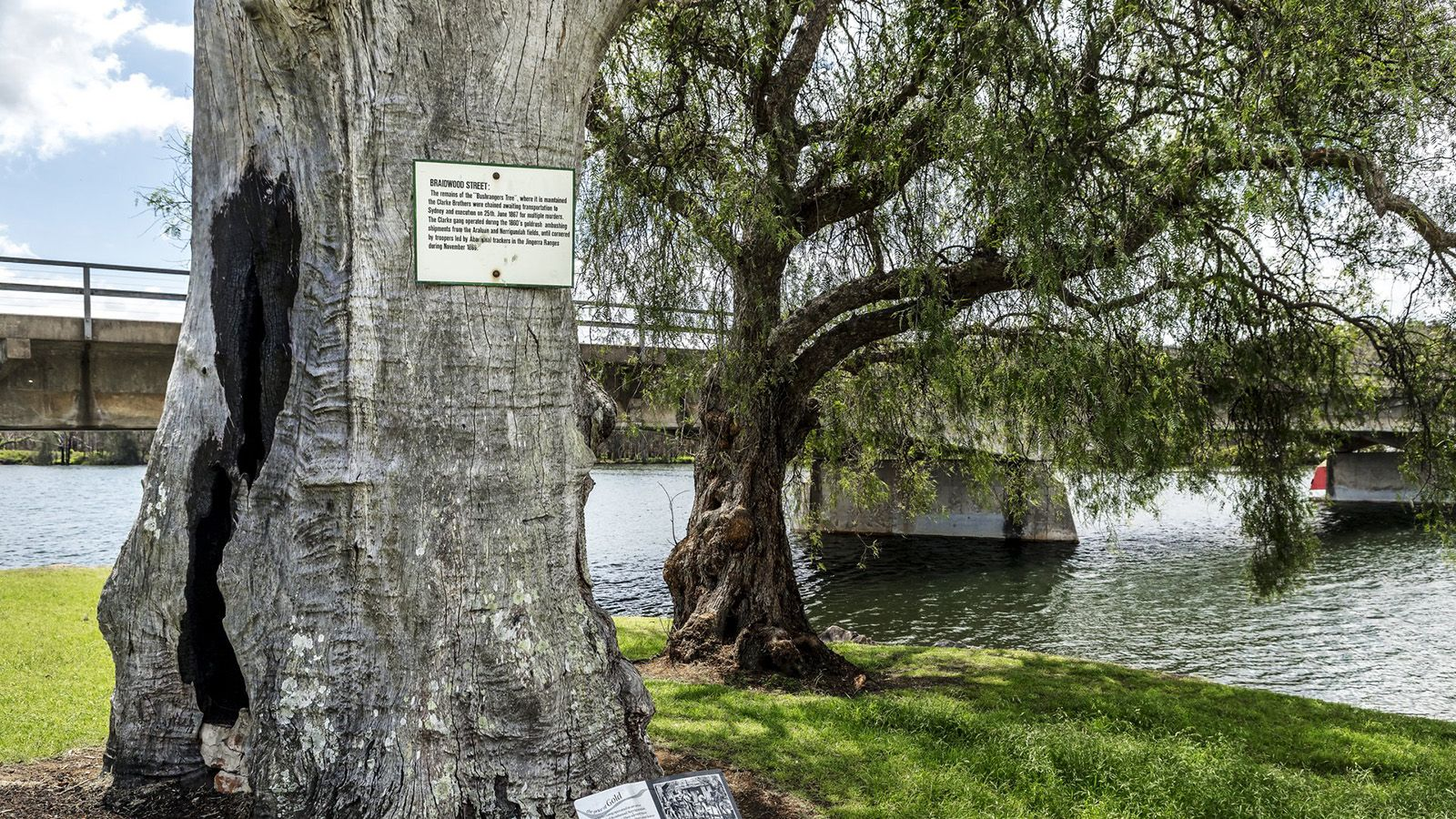 Cropped photo of the 'Bushrangers tree' in front of Nelligen Bridge banner image