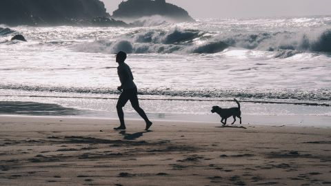 Dog-friendly beaches and areas