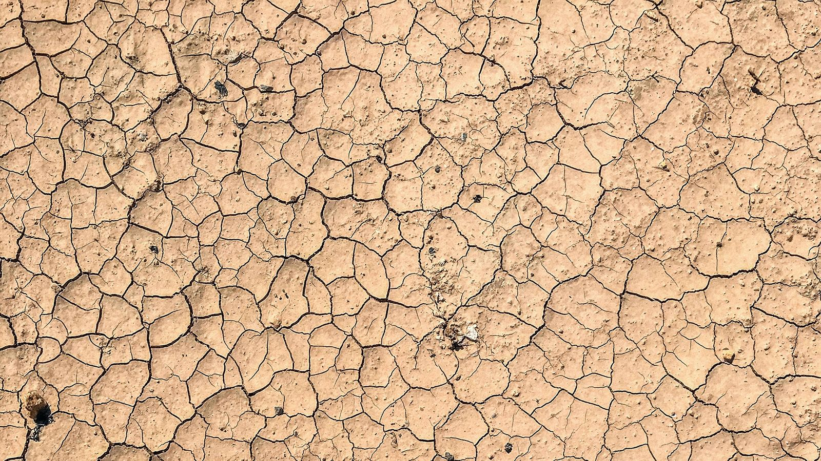 Dry cracked earth banner image
