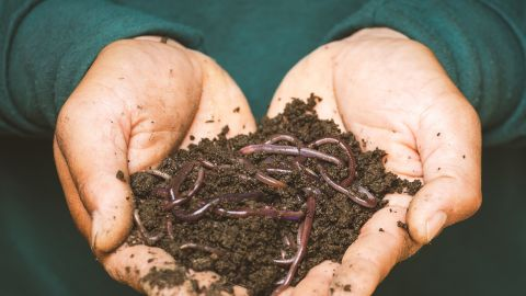 Home composting and worm farming