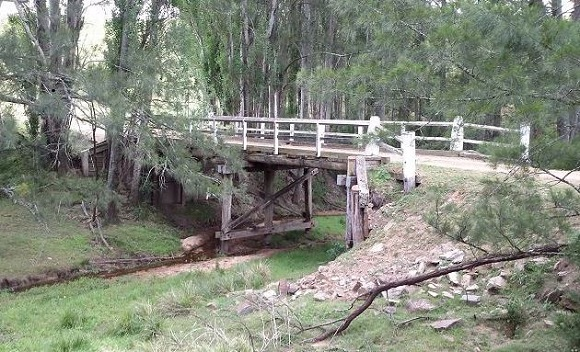 The timber bridge sits amid she oak trees