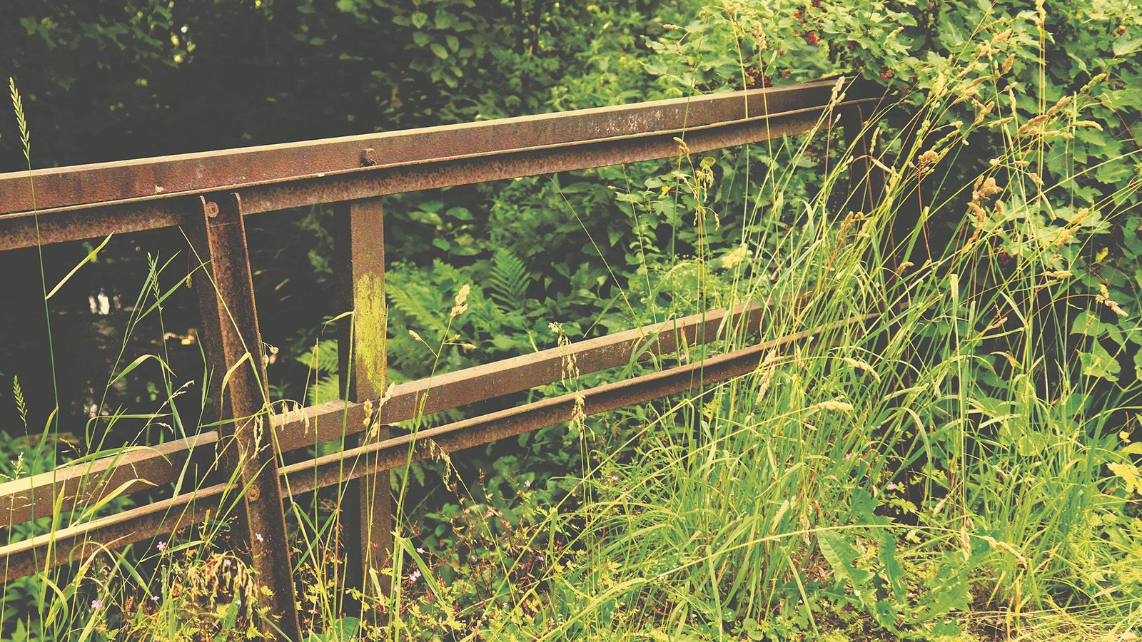 Long grass growing over a rusty gate banner image
