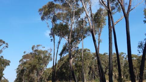 Burnt trees on a roadside