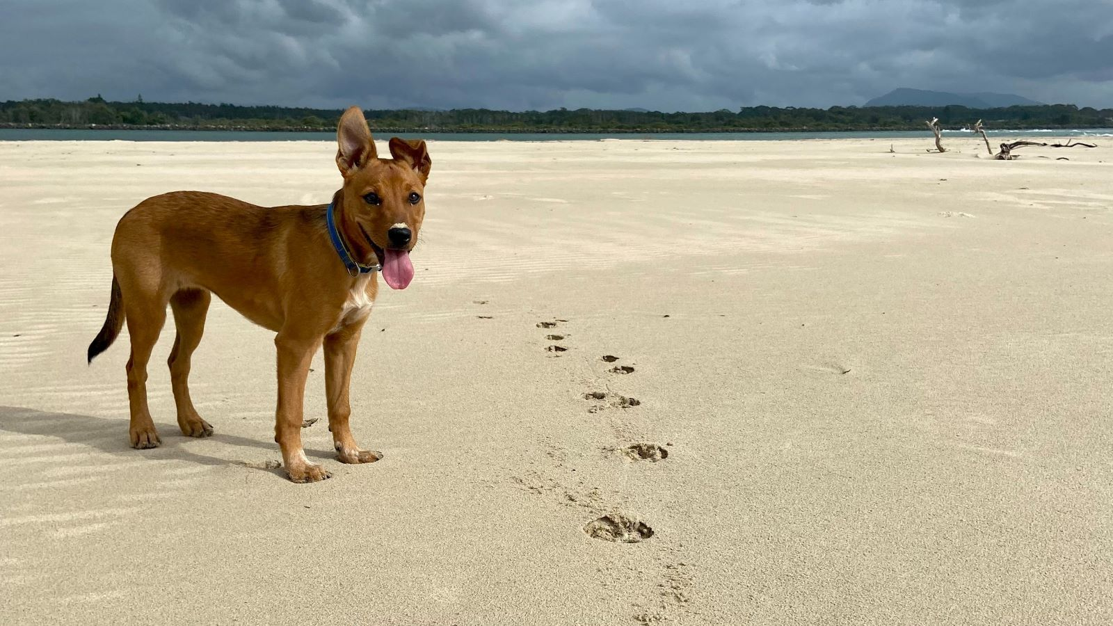 Girl sitting down on grass patting a dog sitting next to her banner image