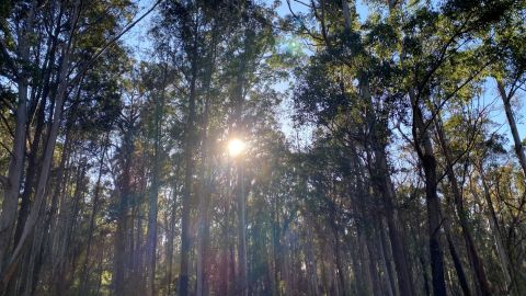 The sun shines through trees.