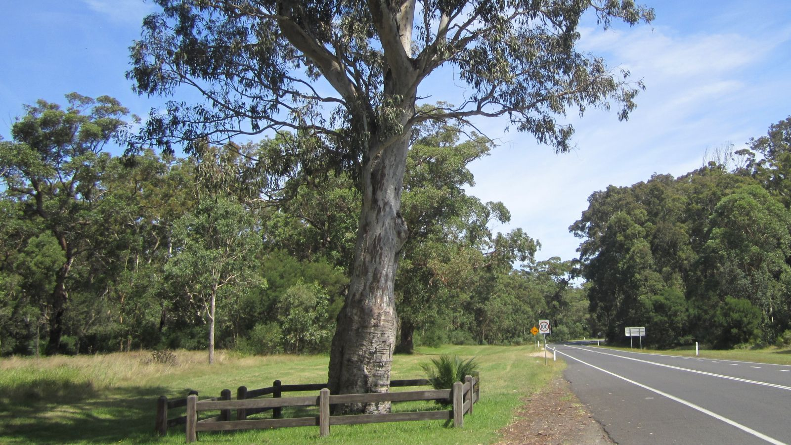 Heritage tree with fencing around it banner image